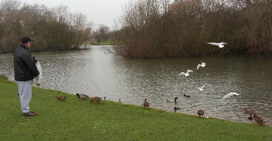 Kingston-upon-Hull, UK: east park lake, Hull.