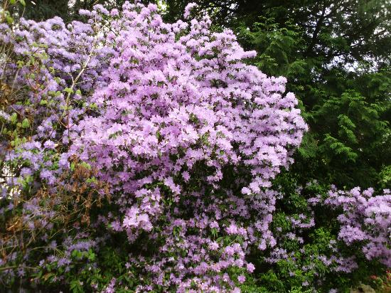 More Picture Of Crystal Springs Rhododendron Garden Portland Tripadvisor