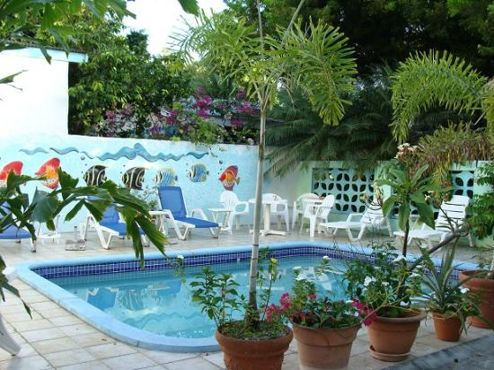 Turquoise Shell Inn: Pool