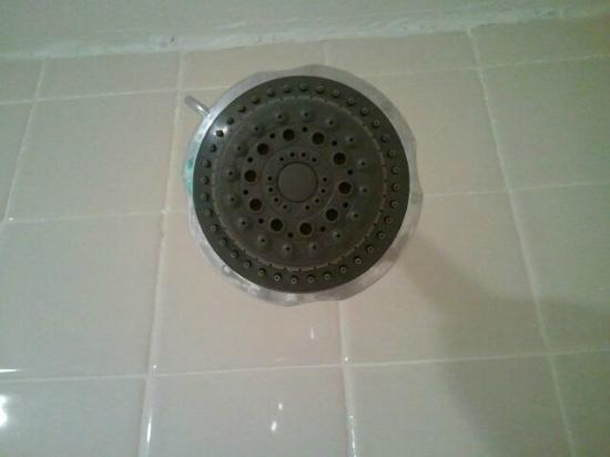Ramada Hilton Head: Showerhead - clean!