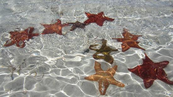 Melia Buenavista: Starfish