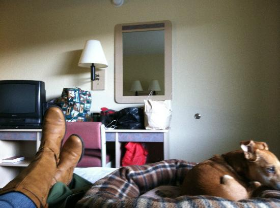Motel 6 Reno-Livestock Events Center : In my room.  Even the dog looks a little scared.