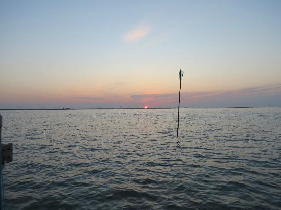 Escursioni in Barca nel Delta del Po - Alberto Barini