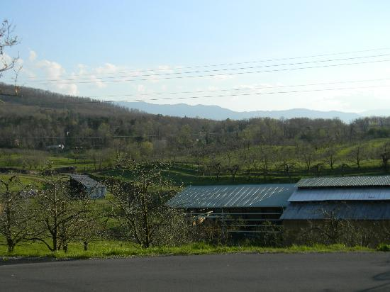 Carver's Orchard & Applehouse Restaurant: View from the Dining Room March 2012