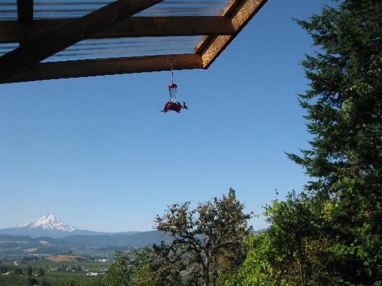 Panorama Lodge: more photo from the patio, with humming bird