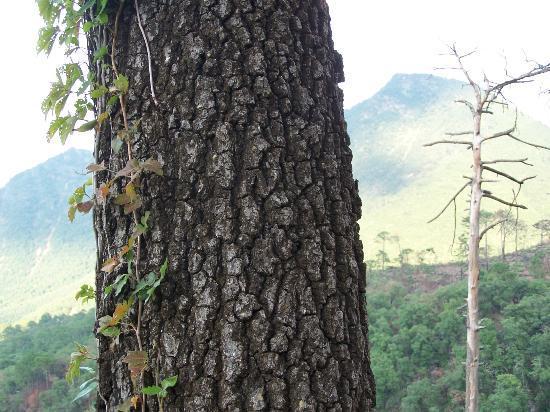 Tronco de arbol de chipinque picture of parque ecologico - Tronco de arbol para decoracion ...