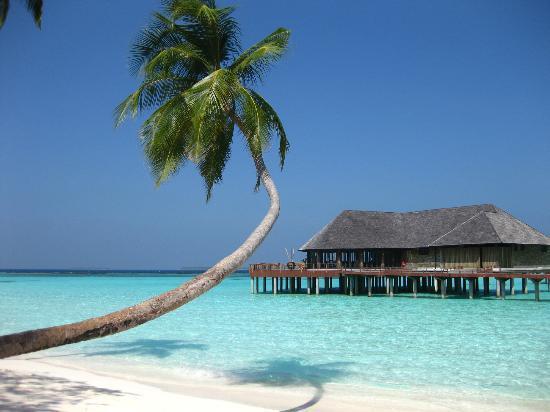 The Sun Siyam Iru Fushi Maldives: ハネムーン