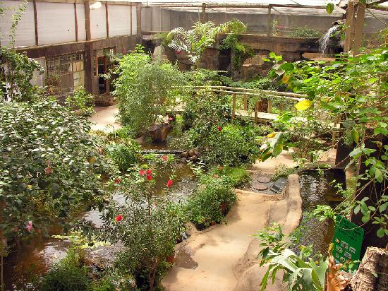 Butterflies for Africa: Tropical butterfly enclosure
