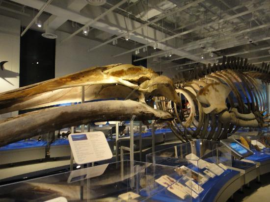 Canadian Museum of Nature: the museum inside