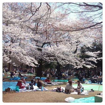 Yoyogi-Park: Yoyogi park in spring time