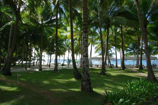 Henann Resort, Alona Beach: Alona beach 80m from the hotel
