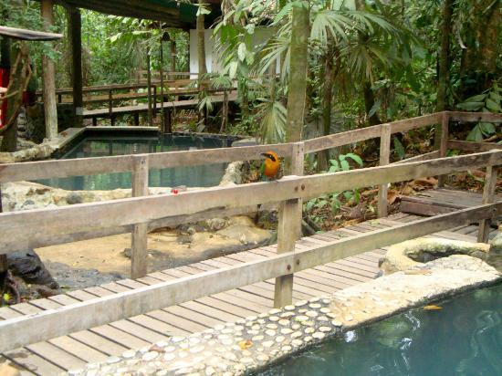 Termales del Bosque: Hot Springs