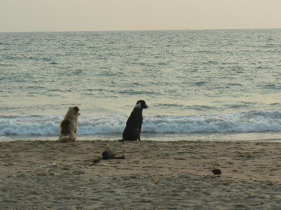 Villa Bomfim: пляж