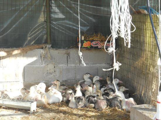 Agriturismo Al Palazzetto: animali