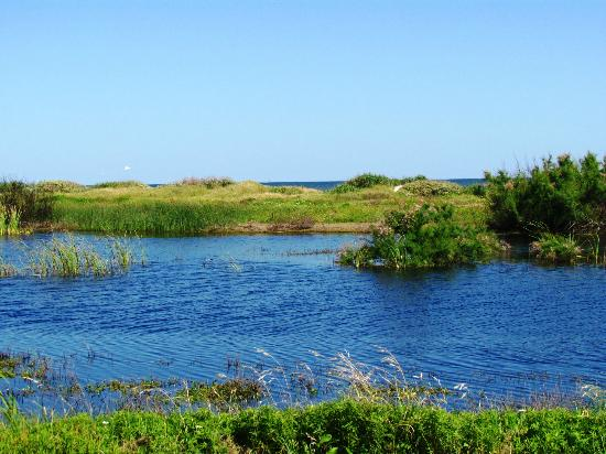 Galveston Island State Park: small lagoon behind dunes is full of birds