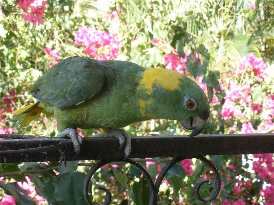 "Hotel Villa Casa Blanca: ""Hola!"" - Paco, one of the hotel's parrots"