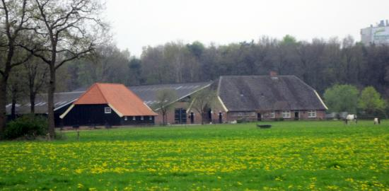 Het Wapen Van Delden Motel: a farm beside the hotel