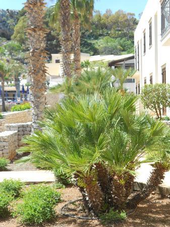 Hotel / Villaggio Cala Mancina: Hotellet