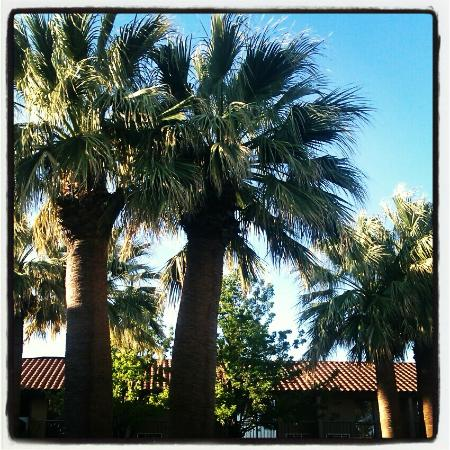 Crystal Inn Hotel & Suites St. George: Palm trees by the pool.