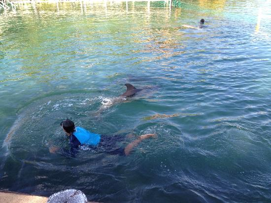 Villas Picalu B&B Boutique: early morning dolphin training at nearby marina
