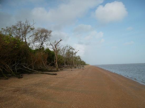 Foundation for Nature Preservation (Stinasu): Beach of Matapica