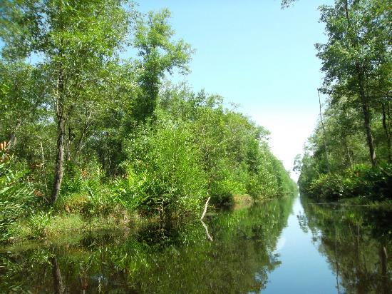 Foundation for Nature Preservation (Stinasu): Swamp of Matapica