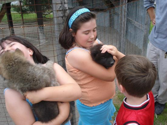 Northwood Buffalo andn Exotic Animal Ranch: Madison Donoghue and baby wolf