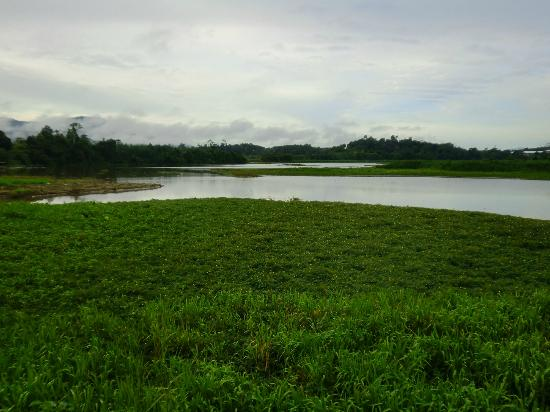 Raba Lake: green