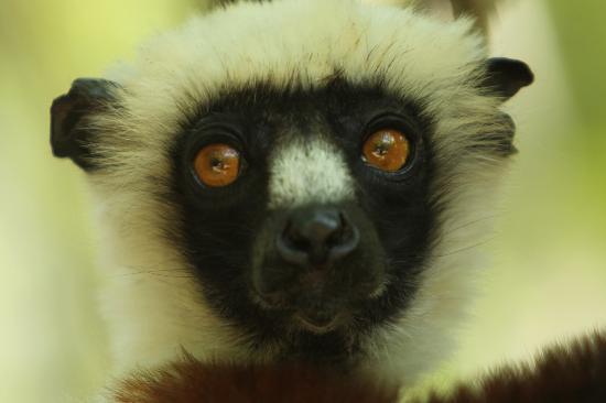 Anjajavy L'Hotel: z lemurem oko w oko