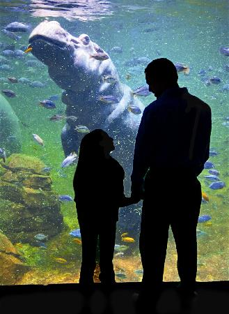 Adventure Aquarium Camden Nj Top Tips Before You Go