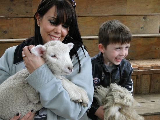 Sheepworld: Being cuddled (and sucked!) by a lamb