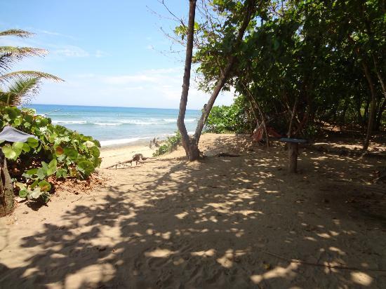 PauHana Surf School: beach view from PauHana
