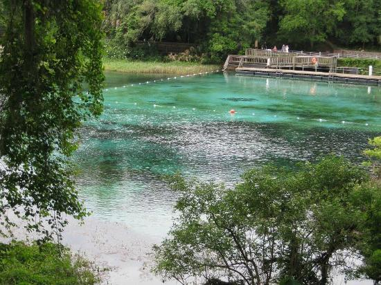 Rainbow Springs State Park : Swimming area with amazing crystal clear aqua colored water