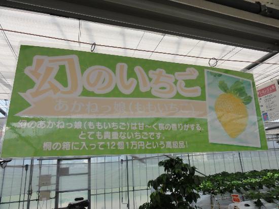 Gourmet Strawberry Kan Maeda: 幻のいちごは一人1つ