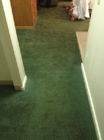 Extended Stay America - Indianapolis - North - Carmel: Dated, Moldy-smelling carpet