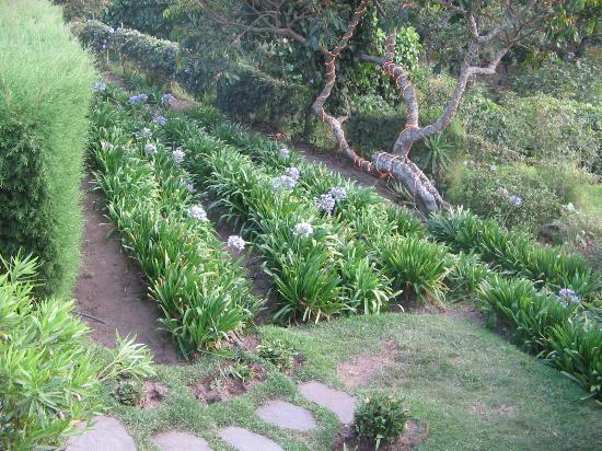 Las Brumas Grill y Café: Jardín