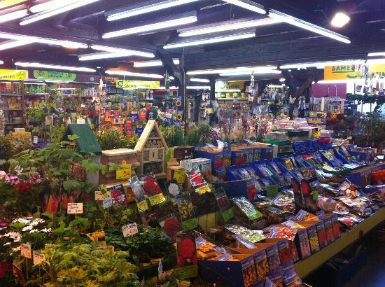 Kleinmarkthalle: Auch Pflanzen gibt es hier zu kaufen