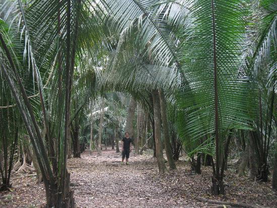Tanisha Tours: jungle