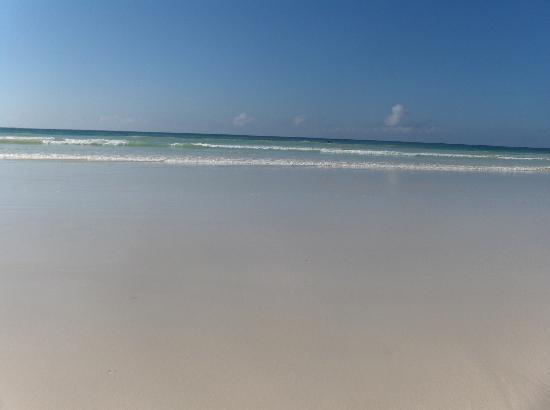 Galapagos Beach at Tortuga Bay : What you see upon arrival