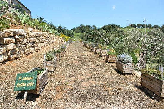 Relais Parco Cavalonga : Il campo delle erbe