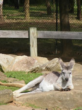 Calmsley Hill City Farm: Kangaroo