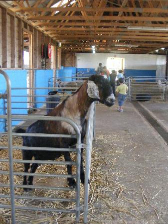 Calmsley Hill City Farm: The Farm Nursery