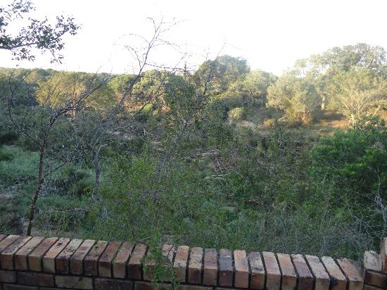 Elandela Private Game Reserve: VIEW FROM OUR ROOM - BREATHTAKINGLY BEAUTIFUL!!!