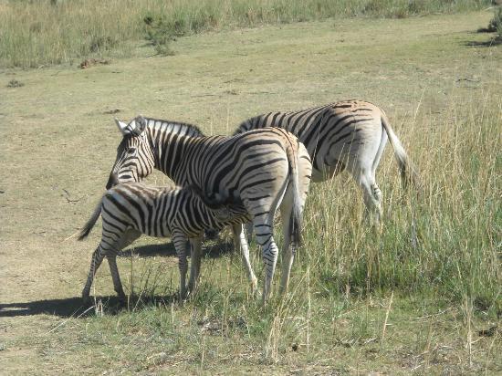 Fairy Glen Private Game Reserve: animals