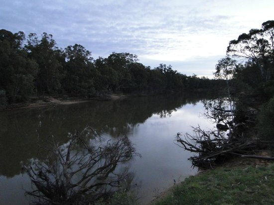 Moama, Australia: View of the Murry River just a minute or less from the room.