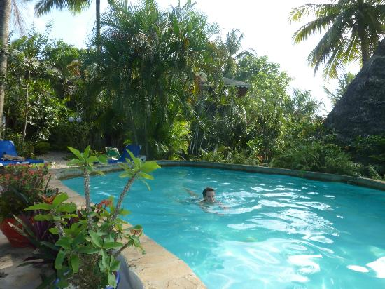 Cabarete Surfcamp: Pool