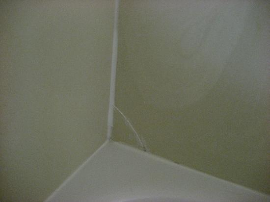 Holiday Inn Express Greenville Downtown: Glued Shower Corner