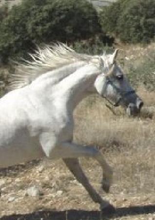Sierra Pelada Horse Riding School