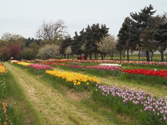 Veldheer Tulip Garden Holland All You Need To Know