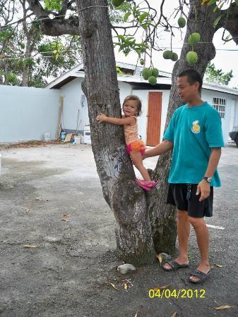 Cocrico Inn: Baby climbing mango tree in parking lot